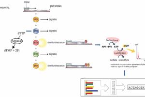 طرح تکنیک های توالی یابی ژنتیک برای درمان بیماری های عفونی