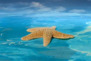 ستاره دریایی در کجا و چگونه زندگی میکند ؟