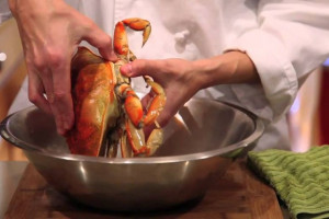 خرچنگ آبی : ۹ مرحله جهت پاک کردن و پخت خرچنگ آبی