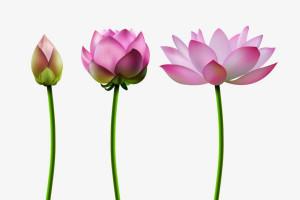 اصطلاح گل از گلش شکفت به چه معناست ؟