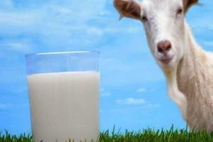 آیا شیر بز حاوی لاکتوز و حساسیت زا است ؟