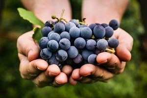 رژیم انگور معجزه ای برای لاغری سریع