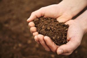 چه نوع خاکی برای رشد گیاه مناسب تر است ؟
