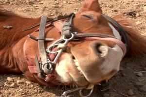 کدام بیماری باعث مرگ ناگهانی اسب می شود؟