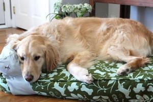 نگهداری سگ در خانه چه حکمی دارد؟
