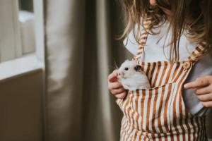 36 اسم بامزه برای همستر ماده و نر