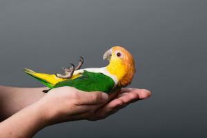 10 ماده غذایی که باعث مسموم شدن پرنده می شود