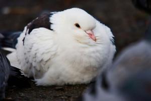 10 بیماری رایج تنفسی در پرندگان