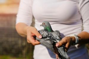 این علائم از نشانه های بارز درد و بیماری در پرندگان است