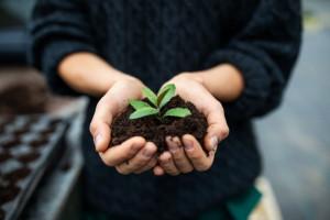 کود سه بیست چه فوایدی برای گلها دارد ؟