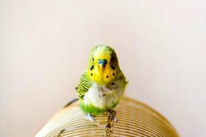 هر آنچه که در مورد جرب در پرندگان باید بدانید!