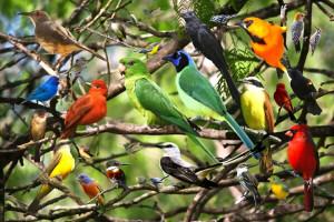 بیماری سینه کاردی در پرندگان چگونه درمان می شود؟