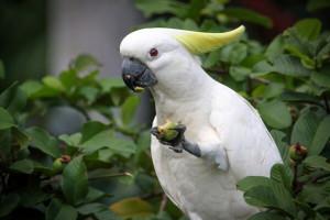 درمان بیماری های پرندگان با کمک میوه و سبزیجات