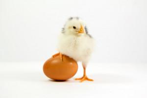 چرا باید به پرندگان تخم مرغ آب پز بدهیم؟
