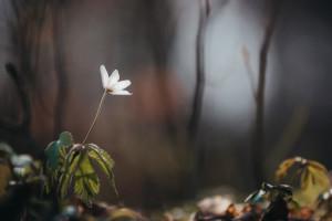 پروژکتور و لامپ رشد گیاه : راهنمای کامل خرید و استفاده