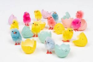 20 راه قطعی برای تشخیص جنسیت جوجه مرغ در خانه