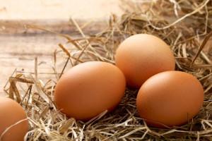 پسر تخم گذاری که تاکنون 20 تخم گذاشته است+ عکس