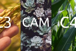 تفاوت گیاهان c3 و c4 و cam