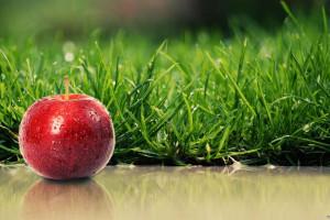 طرز کاشت سبزه عید با هسته سیب فوق العاده شیک و زیبا
