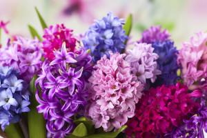 گل سنبل نشانه چیست ؟