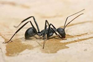 با این مورچه کش ها برای همیشه از شر مورچه ها خلاص شوید