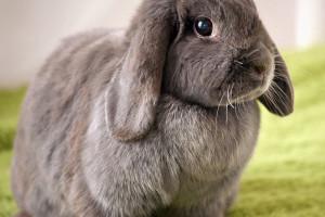 318 اسم بامزه ایرانی و خارجی برای خرگوش نر (پسر)