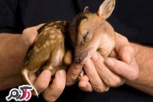 تصاویری زیبا از حیوانات جنگل و دریا