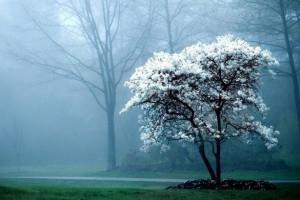 تصاویر زیبا از زمستان  سری دوم