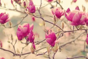تصاویری زیبا از گل های زیبا سری دهم