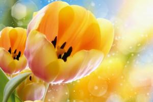 تصاویری زیبا از گل های زیبا سری یازدهم