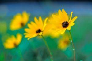 تصاویری زیبا از گل های زیبا سری سیزدهم
