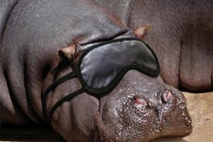عکس های بامزه و دیدنی از حیوانات