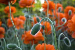 تصاویری زیبا از گل های زیبا سری شانزدهم