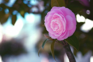 تصاویری زیبا از گل های زیبا سری 22
