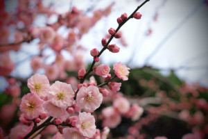 تصاویری زیبا از گل های زیبا سری 23