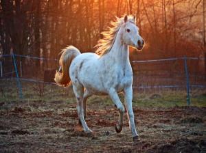 ۱۰۷ نام (اسم) اصیل ایرانی به زبان کردی با ترجمه برای اسب ماده