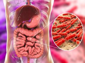 ۴ فایده شگفت انگیز باکتری های روده