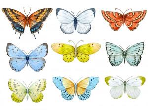 تعبیر خواب پروانه : تفسیر و تعبیر  دیدن پروانه در خواب چیست ؟