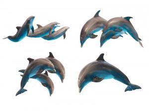 دیدن دلفین در خواب چه تعبیری دارد ؟