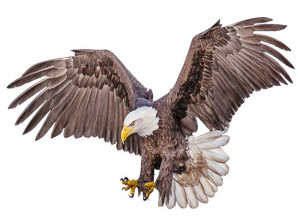 تعبیر خواب عقاب : دیدن عقاب در خواب نشانه چیست ؟