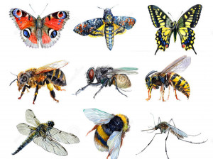 تعبیر خواب حشره : ۳۳ نشانه و تعبیر دیدن حشره در خواب