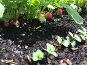 چگونه در آپارتمان خودمان سبزی بکاریم؟