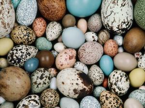 تخم پرندگان و خواص آنها