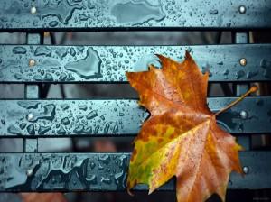 شعر برای پاییز : مجموعه ای از ۵۵ شعر زیبا در وصف پاییز