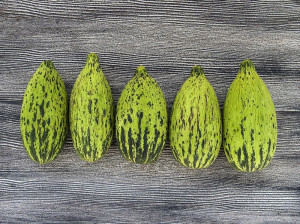 میوه کمبوزه چیست ؟