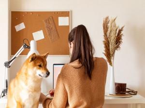 حکم خرید و فروش سگ از منظر شریعت اسلام چیست؟
