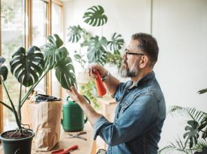 قارچ کش بنومیل ( BENOMYL ) : بهترین سم و آفت کش برای گیاهان