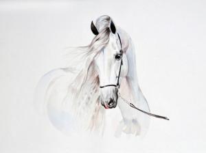 آموزش مرحله به مرحله کشیدن نقاشی اسب