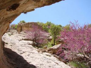 تنگه ارغوان،  طبیعتی دنج در ارتفاعات ایلام