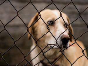 فاجعه در تهران: سوزاندن 50 قلاده سگ در کیسه زباله !